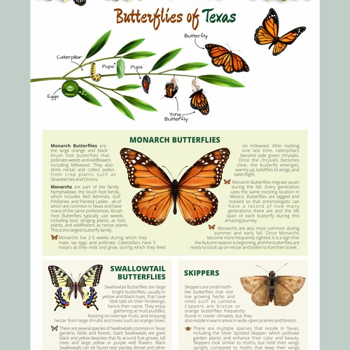 Infographic Butterfly of Texas