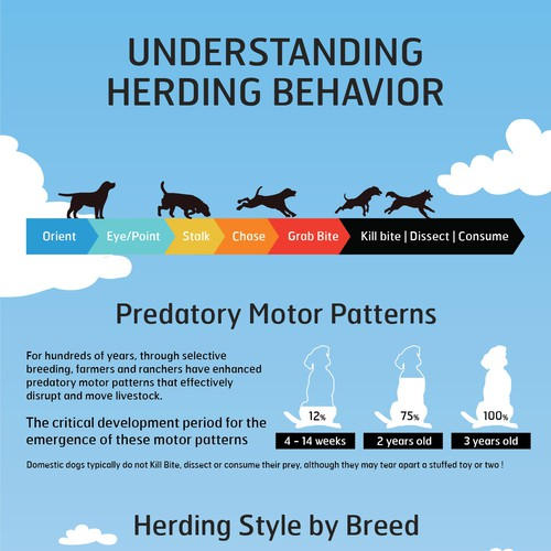 Infographie for Herding behavior