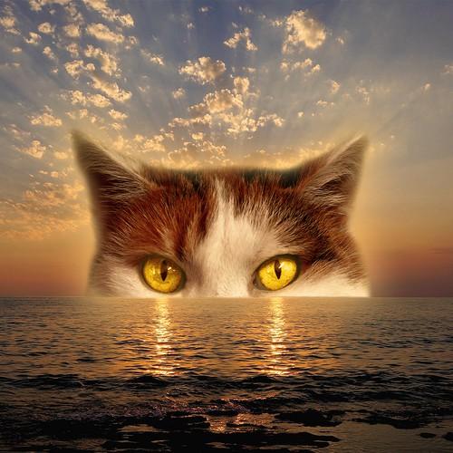 Sunset cat