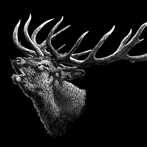 Deer Stag Illustration
