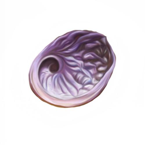 Painting like abalone shell tattoo designs