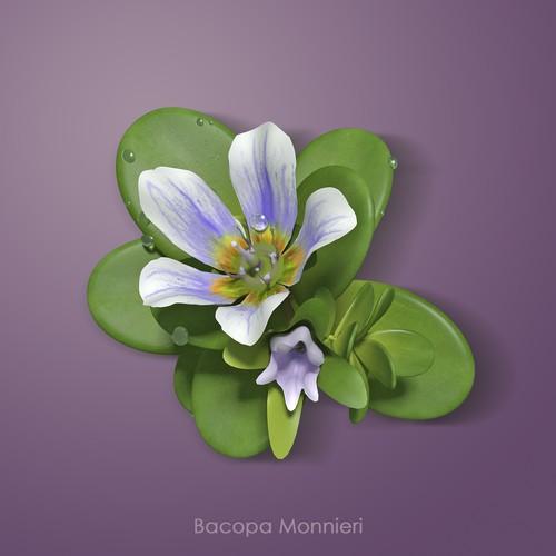 3D Bacopa Monnieri plant image