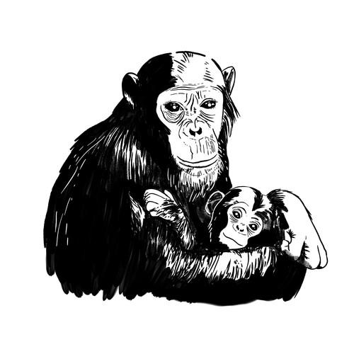 Animal Illustration: Monkey