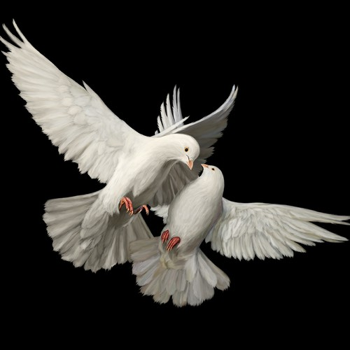 Doves digital painting