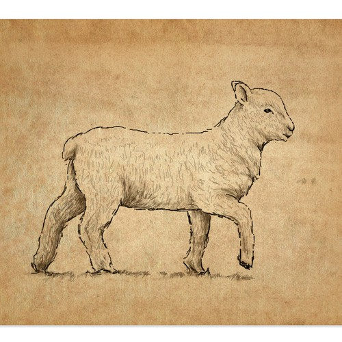 Lamb illustration