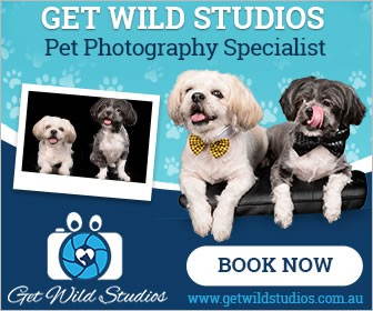 Pet Photography Ads -Ongoing Work for Winner!