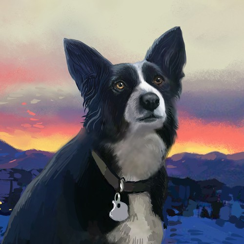 Painting Border collie