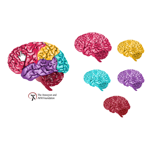 "99nonprofits: Create a ""brain"" illustration that The Aneurysm and AVM Foundation will use for it's new website."