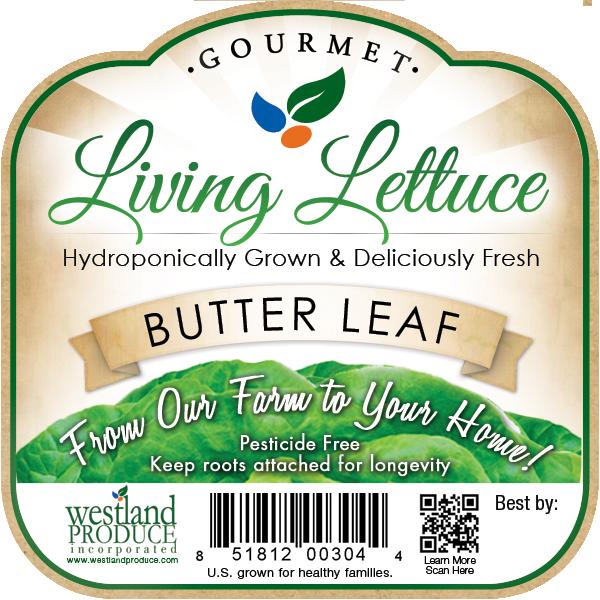 Label design for hydroponic butter lettuce