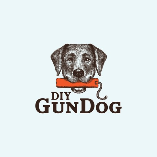 Cute Labrador Retriever holding a bumber for DIY GunDog