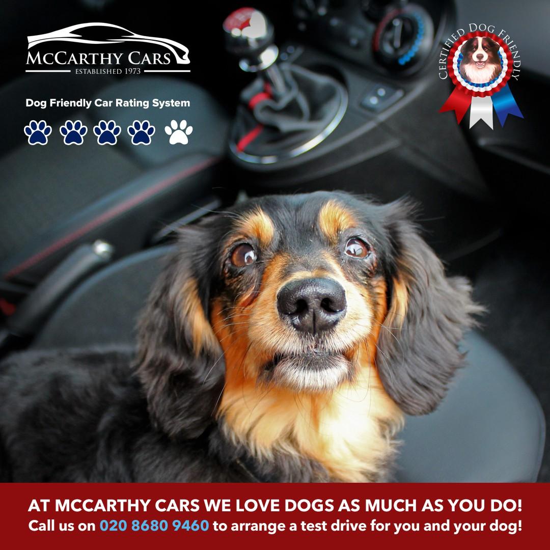 McCarthy Cars dog-friendly campaign