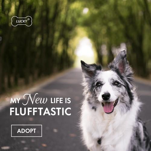 Facebook Ads Animal Rescue