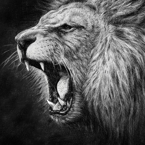 Drawing a Lion from a photo
