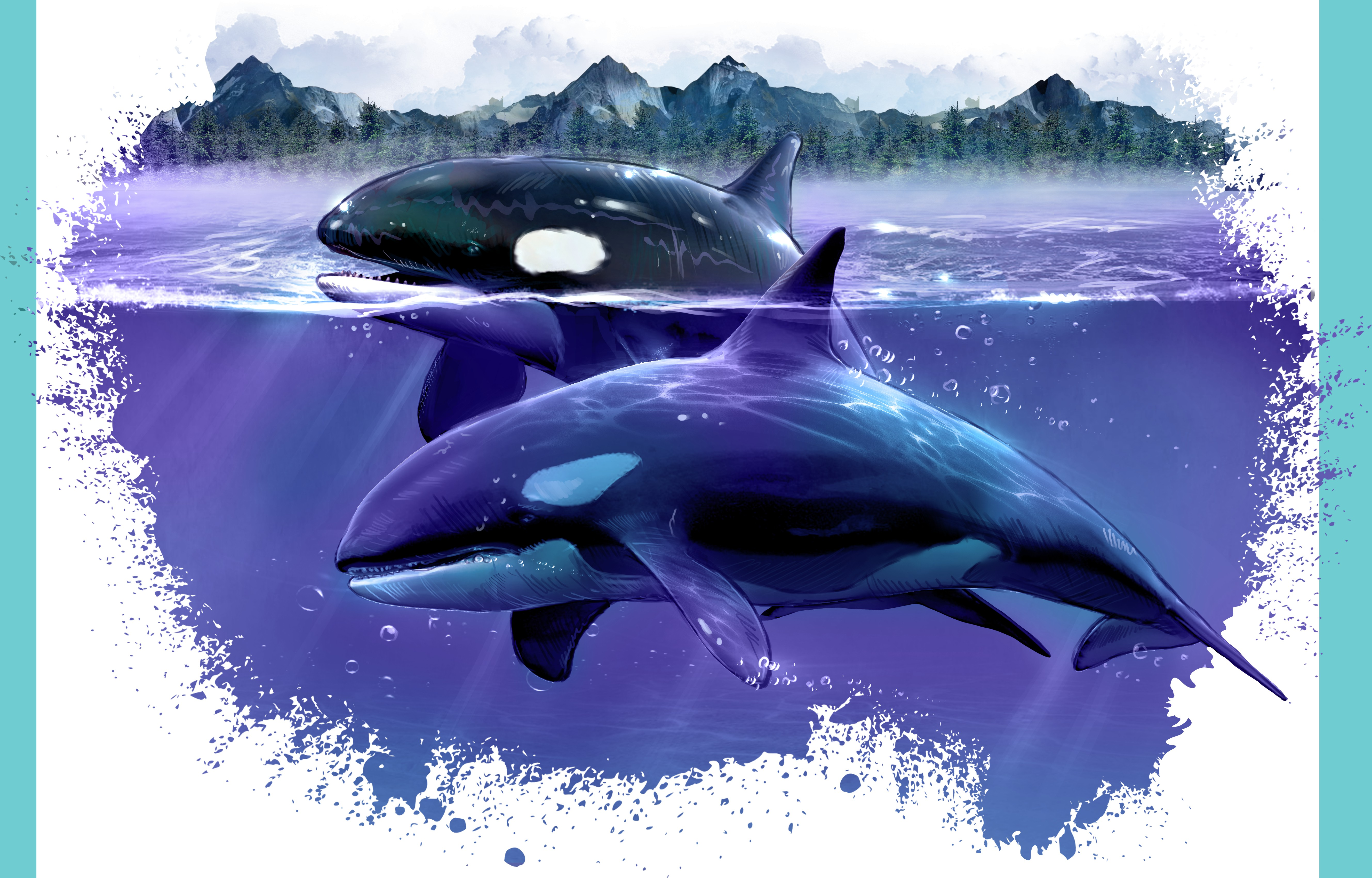 Orca - Also known as the Killer Whale