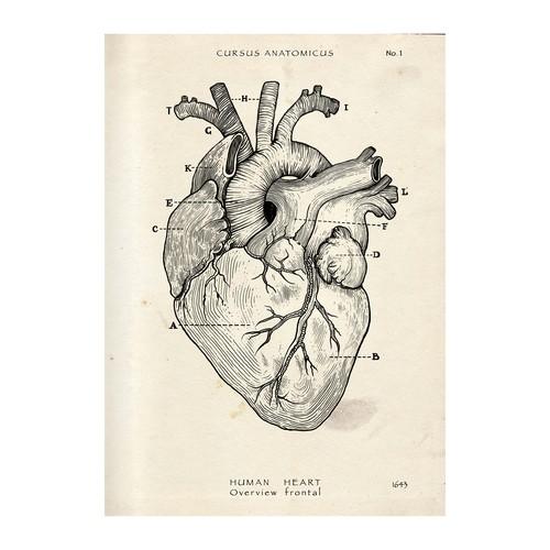 Anatomy Print Poster Proposal