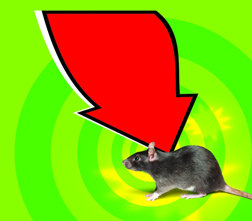 Design an eye catching label for a peppermint oil based mice repellent spray!