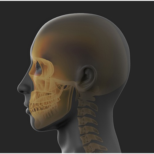 3d xray illustration