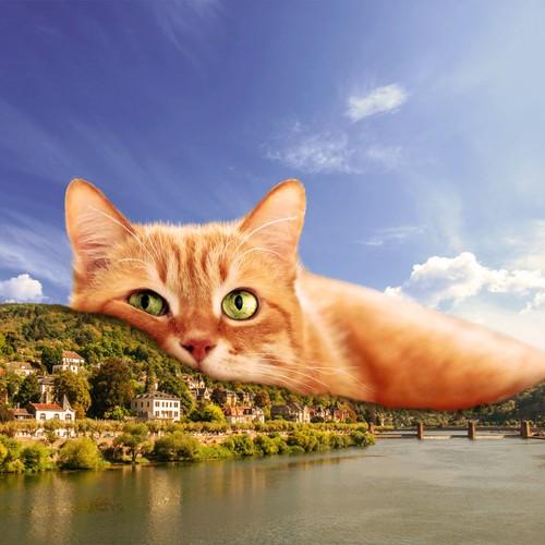 Cat on the city