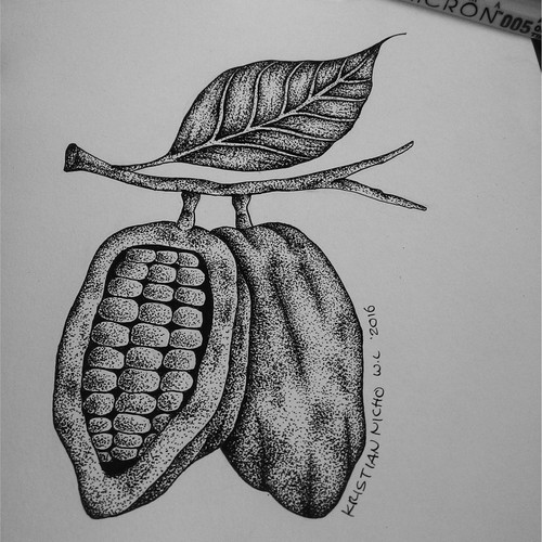 My original hand drawing, Logo for Oregon Craft Chocolatiers