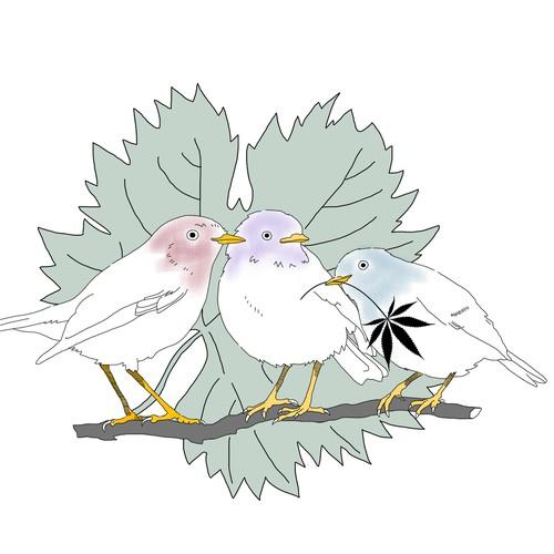 three little bird
