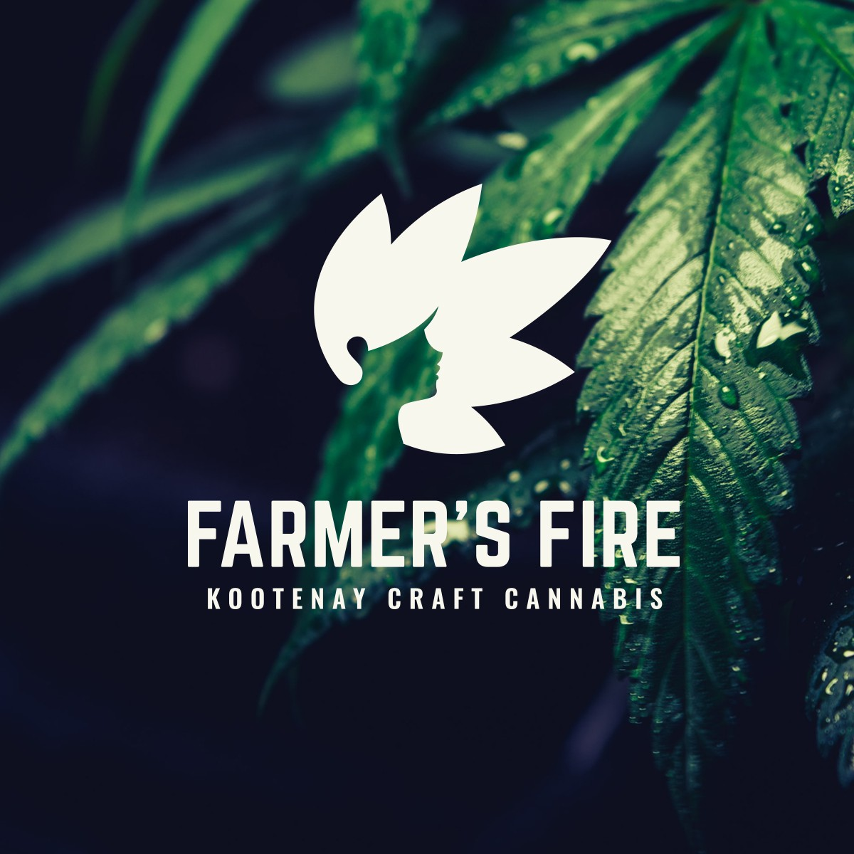 Cannabis Cultivation Business Branding and Logo