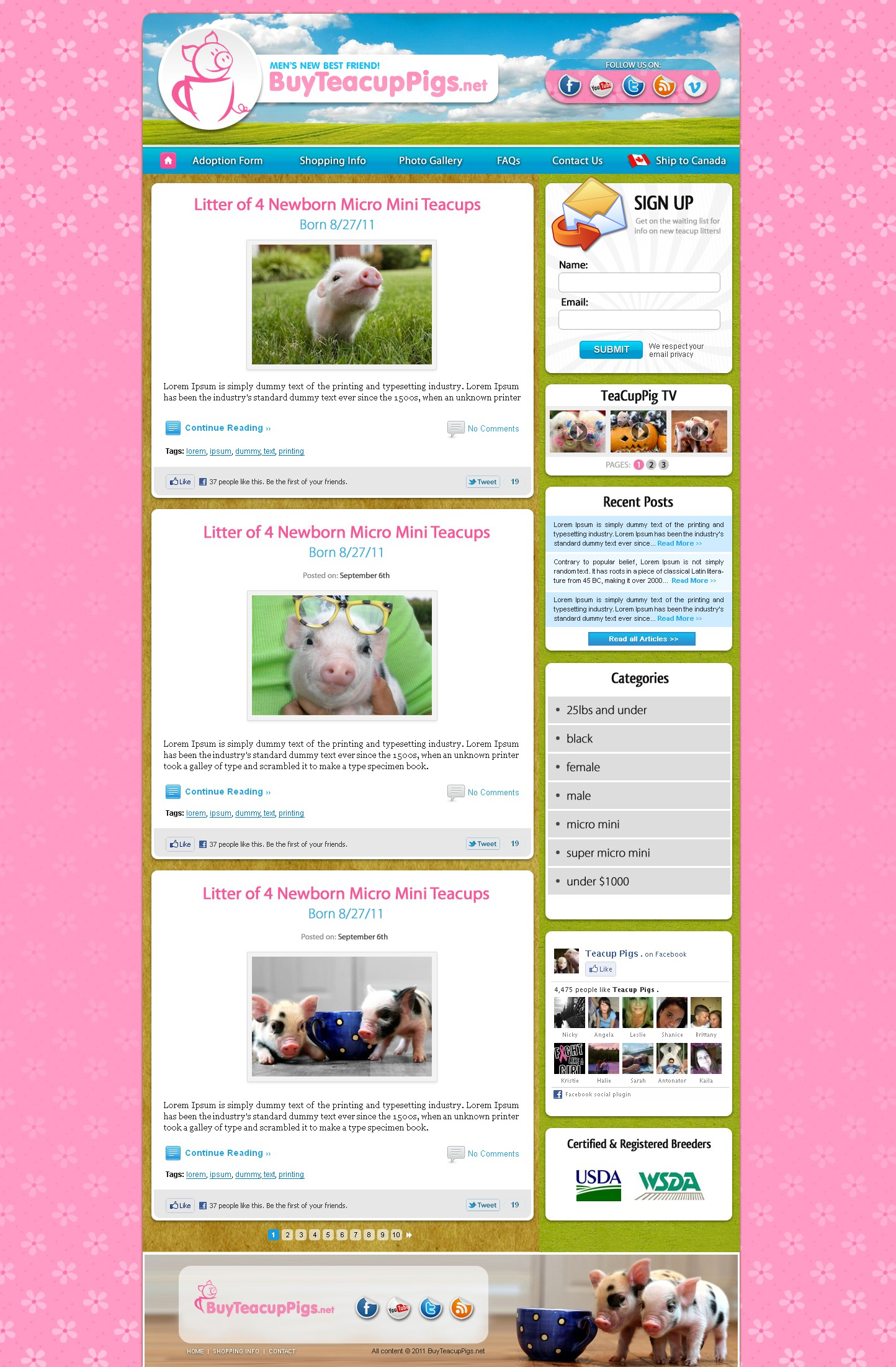 Create the next website design for Buy Teacup Pigs