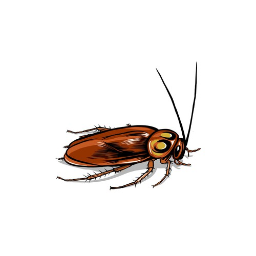 Illustration of the insect pet