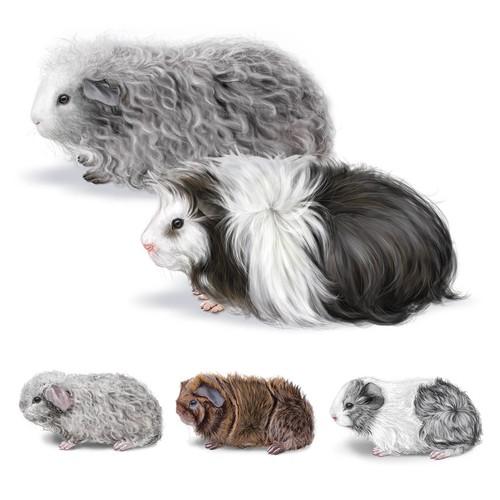 Peruvian Guinea Pigs Illustration