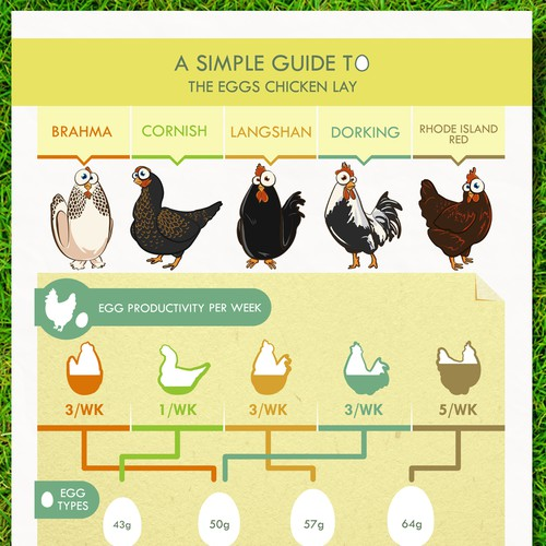 Cotswold Chickens needs a new infographic