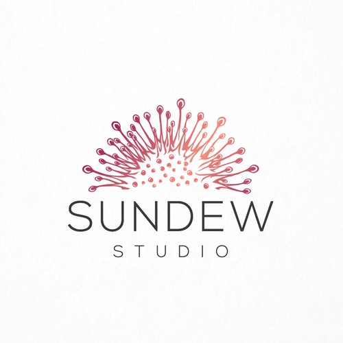 Sundew Plant!