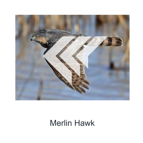 Merlin Labs Logo