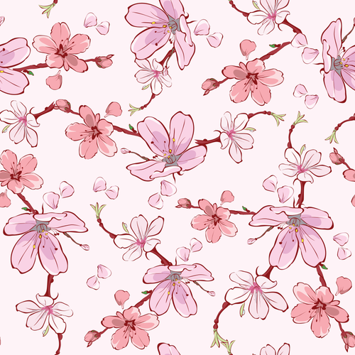 Cherry sakura flowers