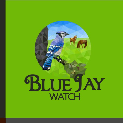 Blue Jay Watch