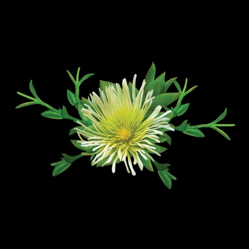 Painting Kanna Flower