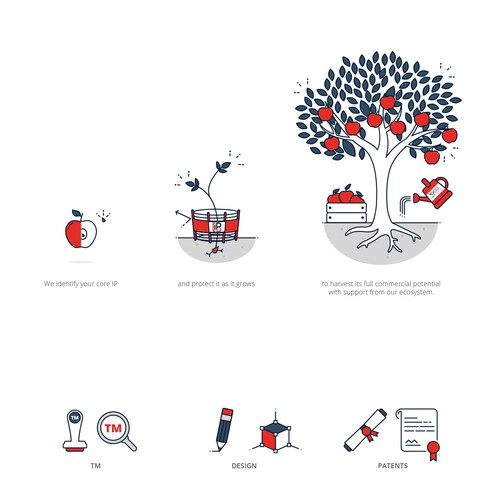 Illustration of apple life cycle