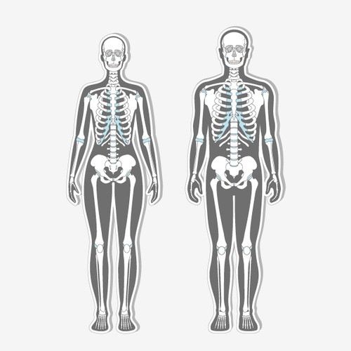Vector Illustration of human skeletons for medical site