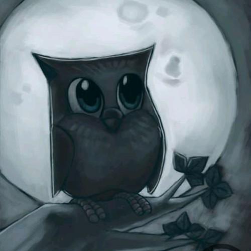 Owl during night.