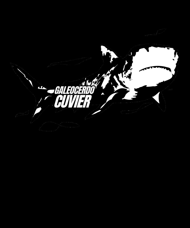 Latin Sharks - Galeocerdo Cuvier