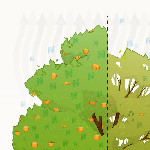 Illustrating how two different products effect the health of a citrus tree