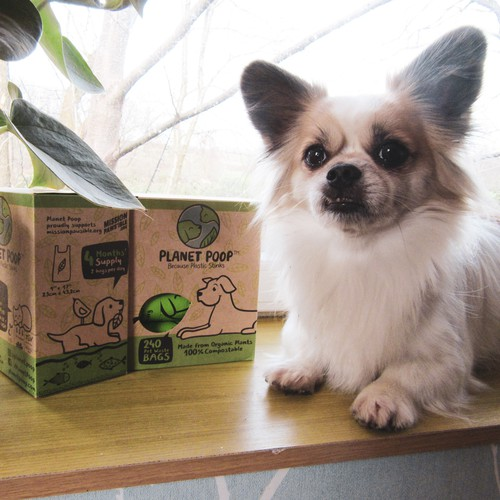 Pet branding & packaging