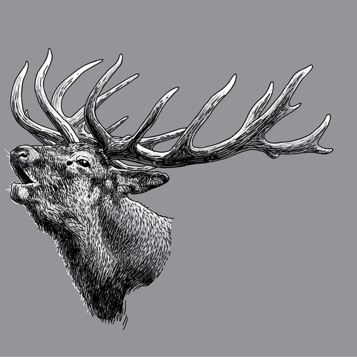 Vector Deer Head Illustration