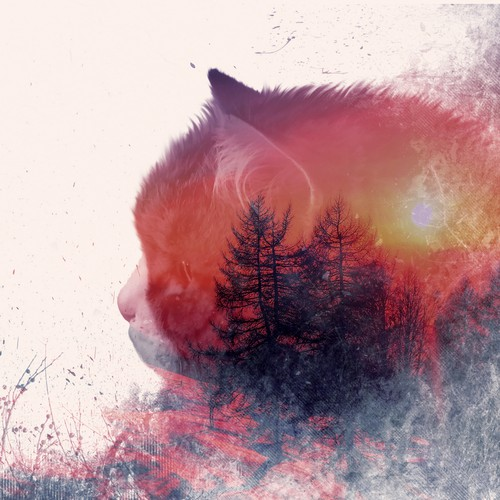 Catty-forest