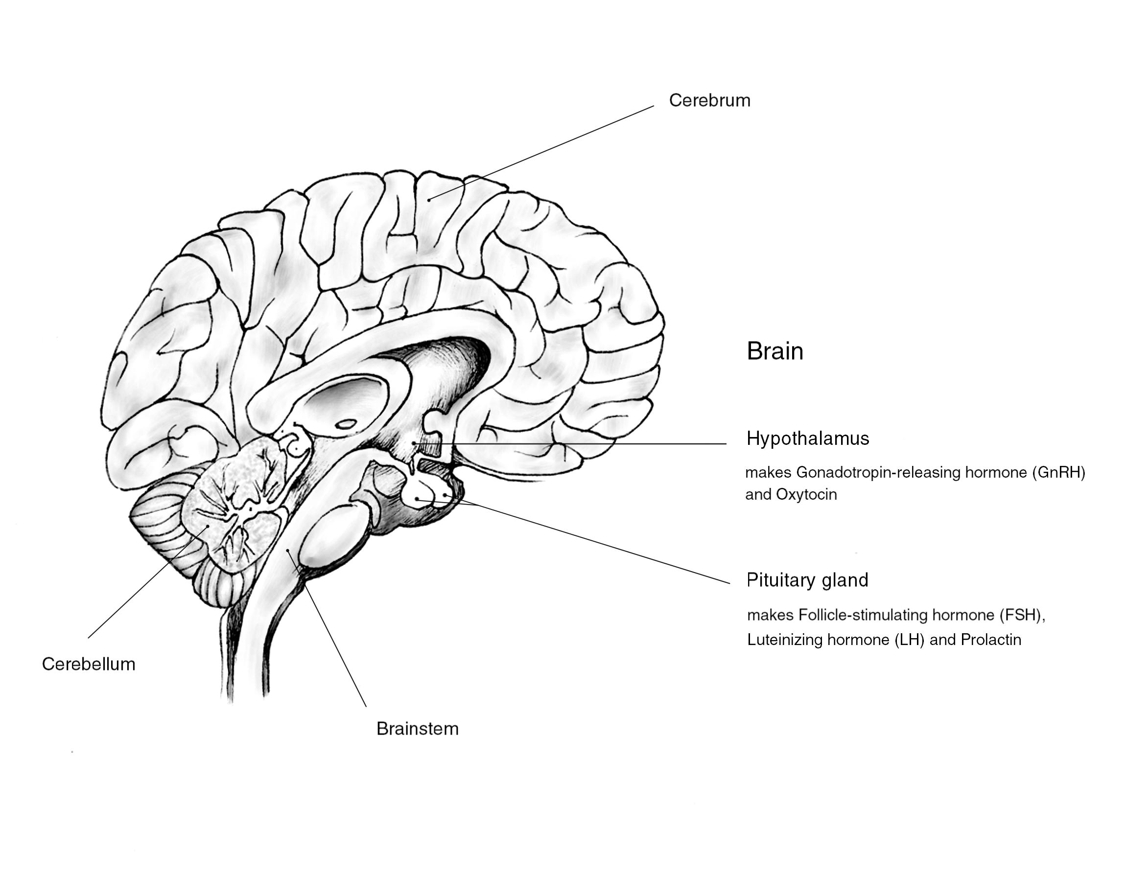 Gynecology Illustrations