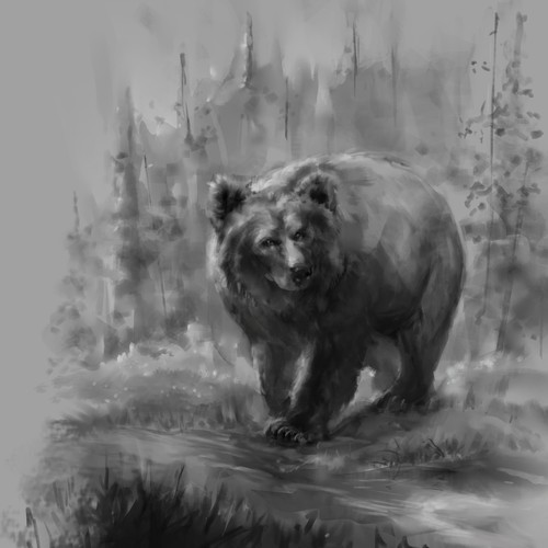 Grizzly bear sketch