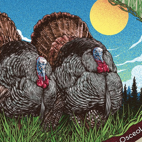 Florida Wild Turkey