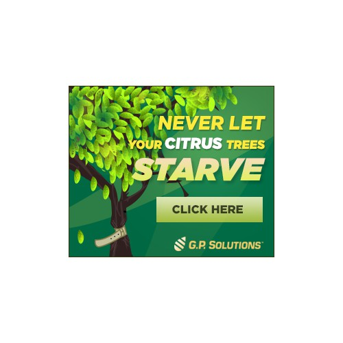 Illustrate a Starving Citrus Tree