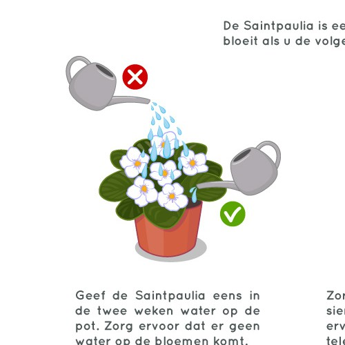 """""""How to take care of plants"""" illustration"""