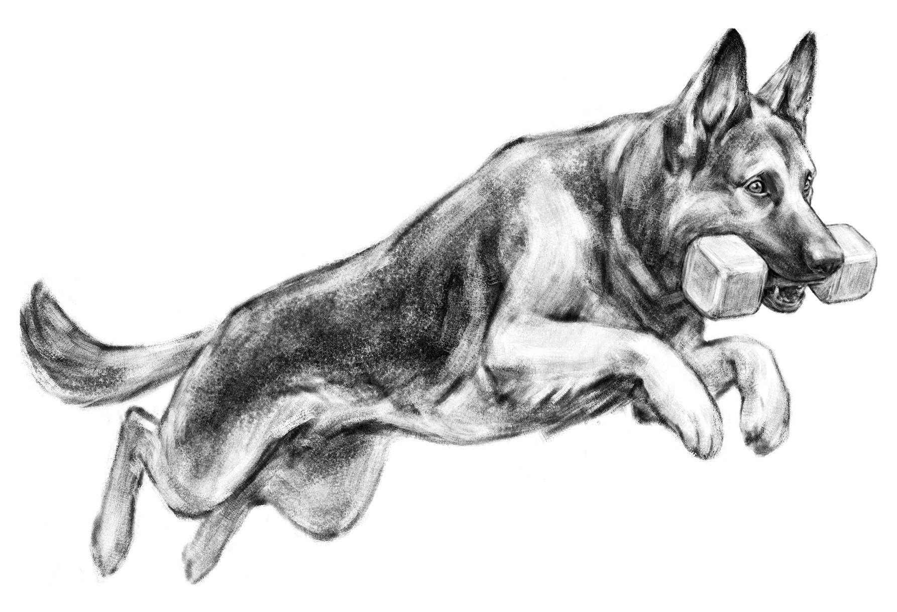 Dog Sport inspired Illustration