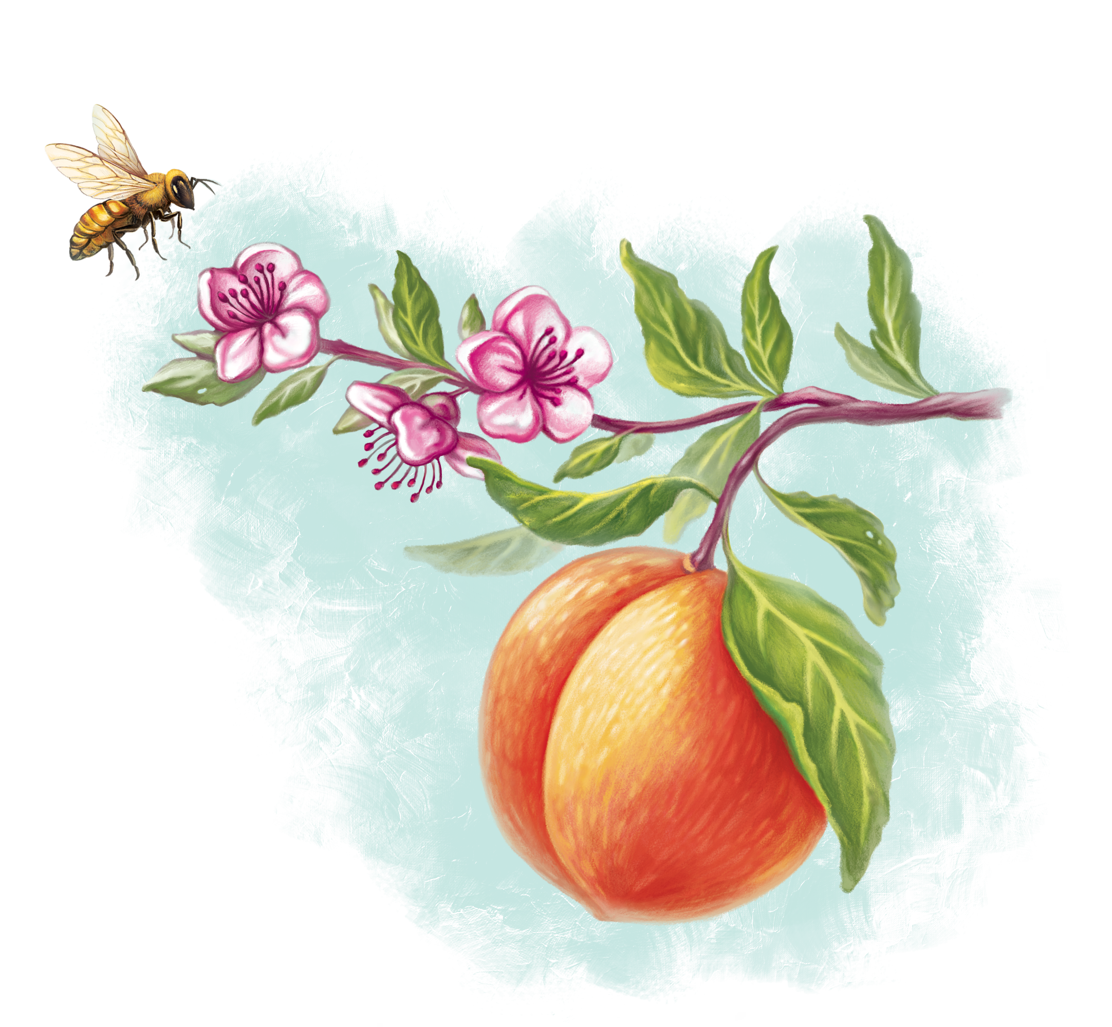 Product Label For Peach Inspired Beauty Products