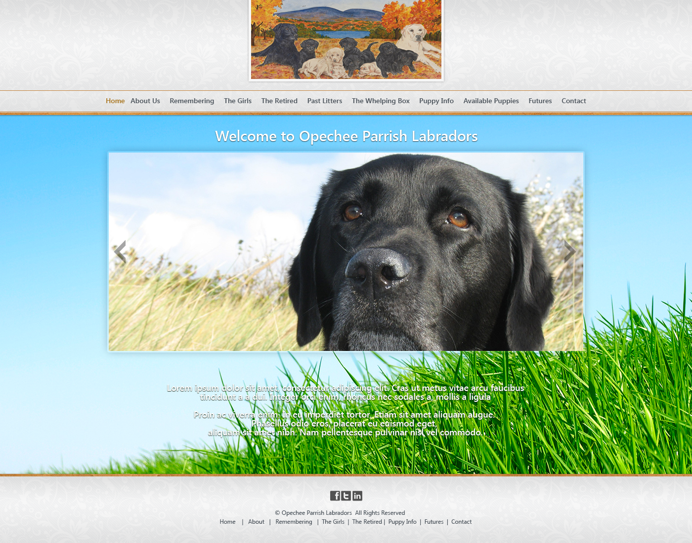 Help Opechee Parrish Labradors with a new website design